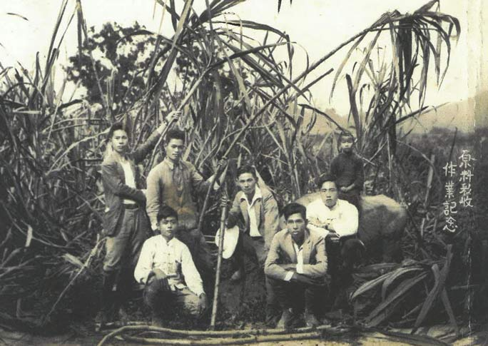 Chitetsu (centre) at a sugar cane farm